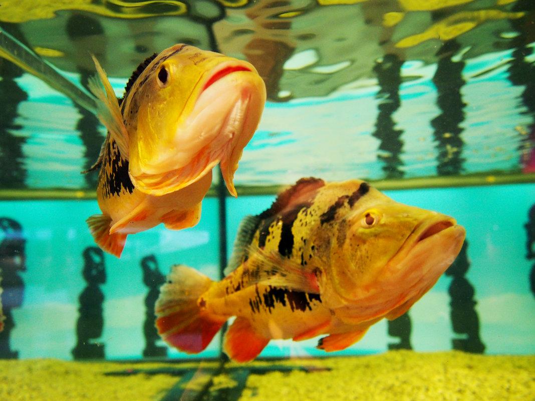 рыбы с острова Бали - elena manas
