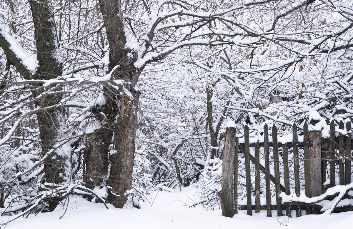 В снежное  королевство... - Елена Иванова