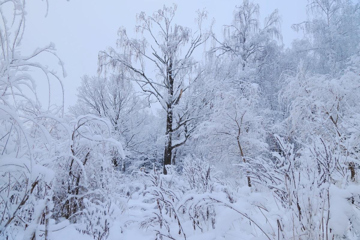 зима - Светлана