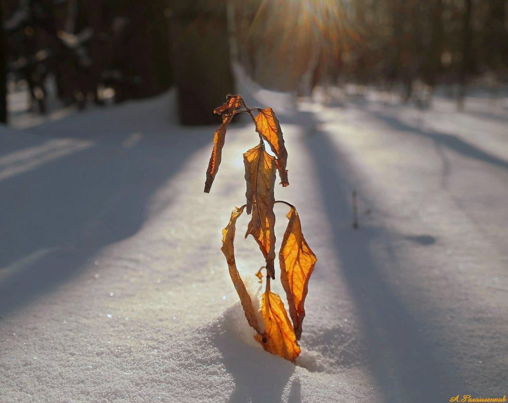 Зарисовки декабря... - Андрей Заломленков