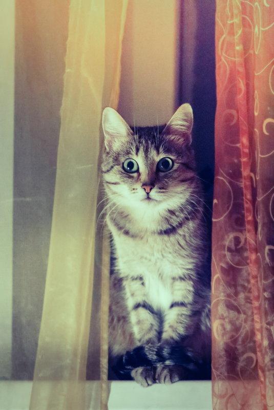 Ещё один котик.. - Сергей Фатеев