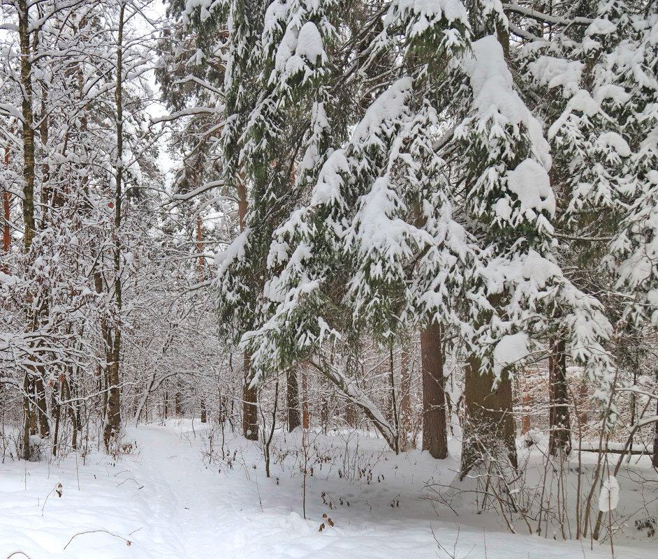Зимний лес - Светлана