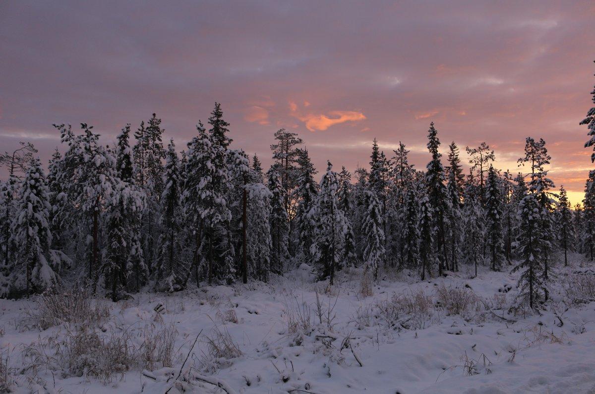 Полярная ночь в лесу