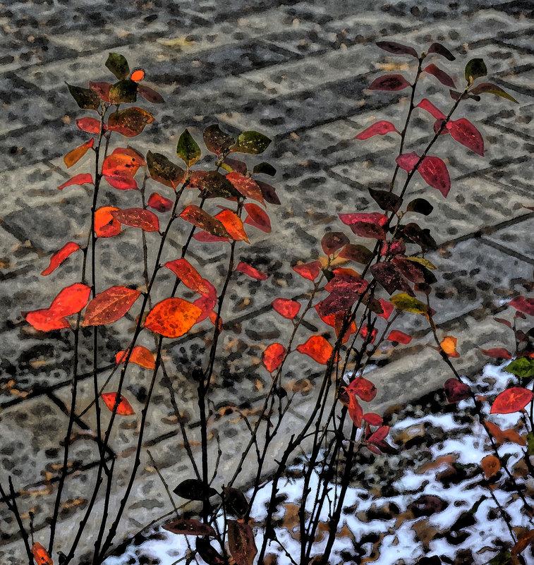 Красные листья - Алексей Виноградов