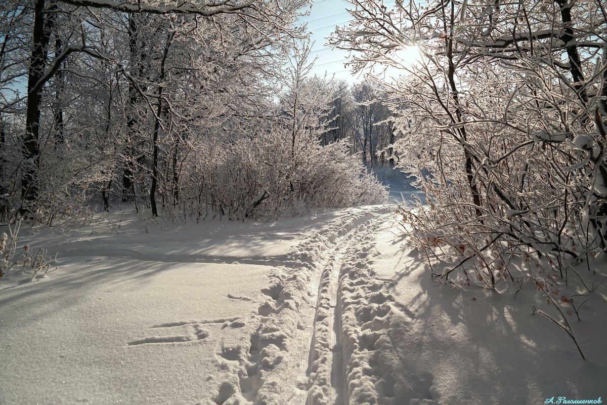 В такой чудесный день бежать на лыжах нам не лень! - Андрей Заломленков