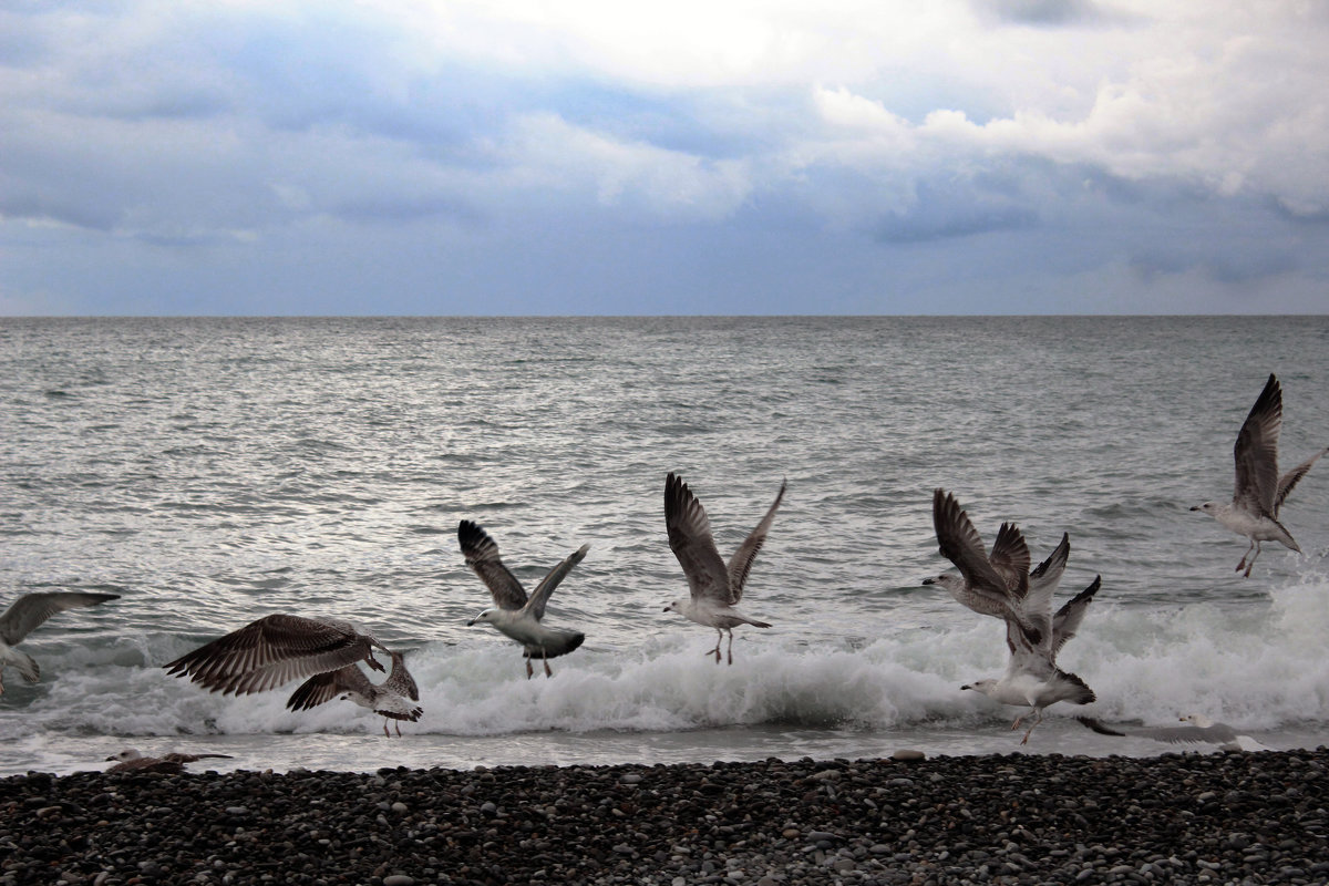 Полет над морем - Мария Андрейчук