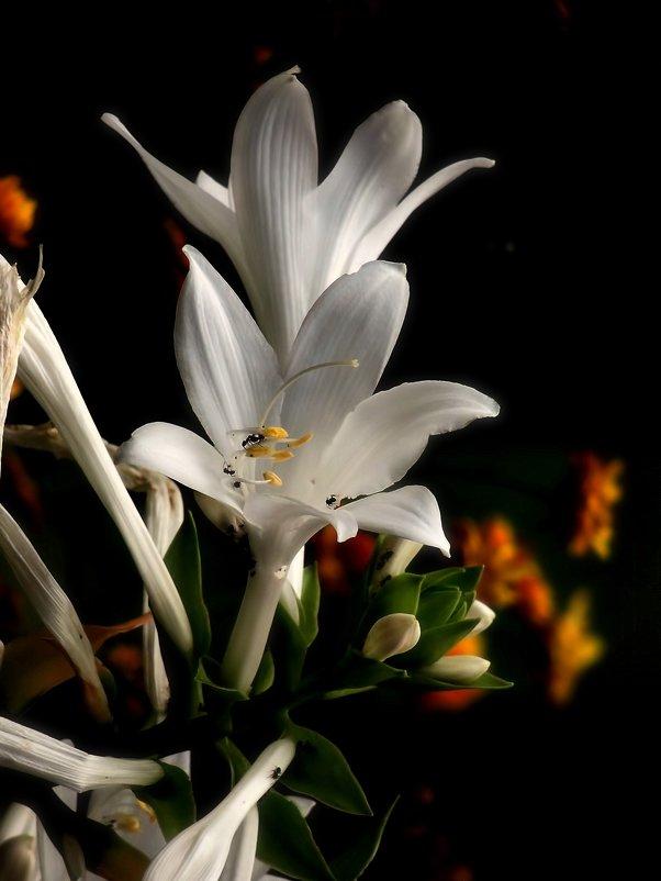 Цветы - Роман Савоцкий