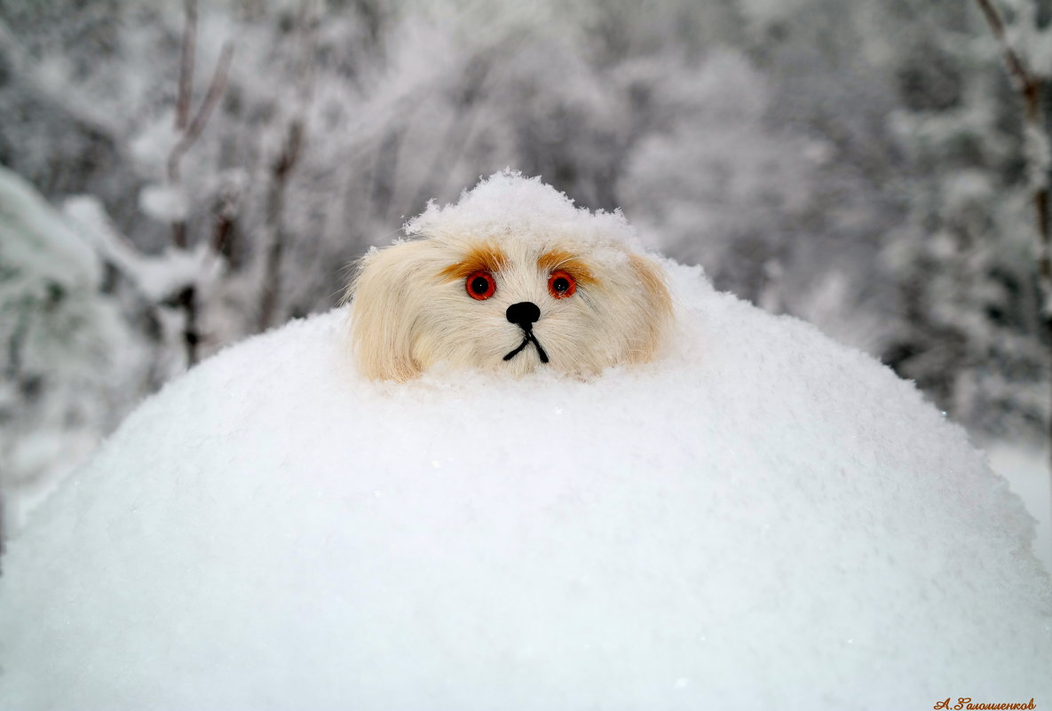 Заметает зима, заметает... - Андрей Заломленков