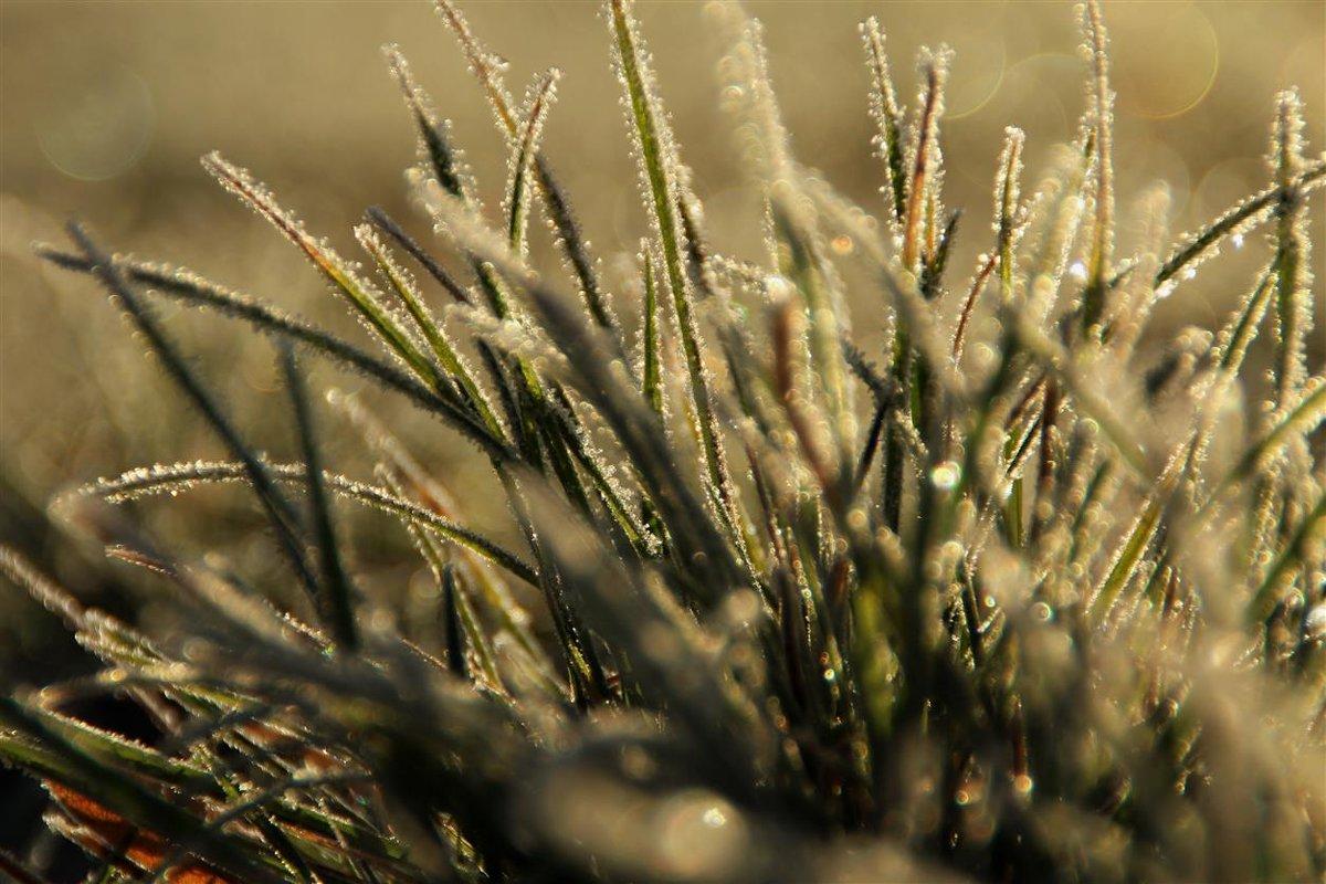 Травинки в серебре - Татьянка *