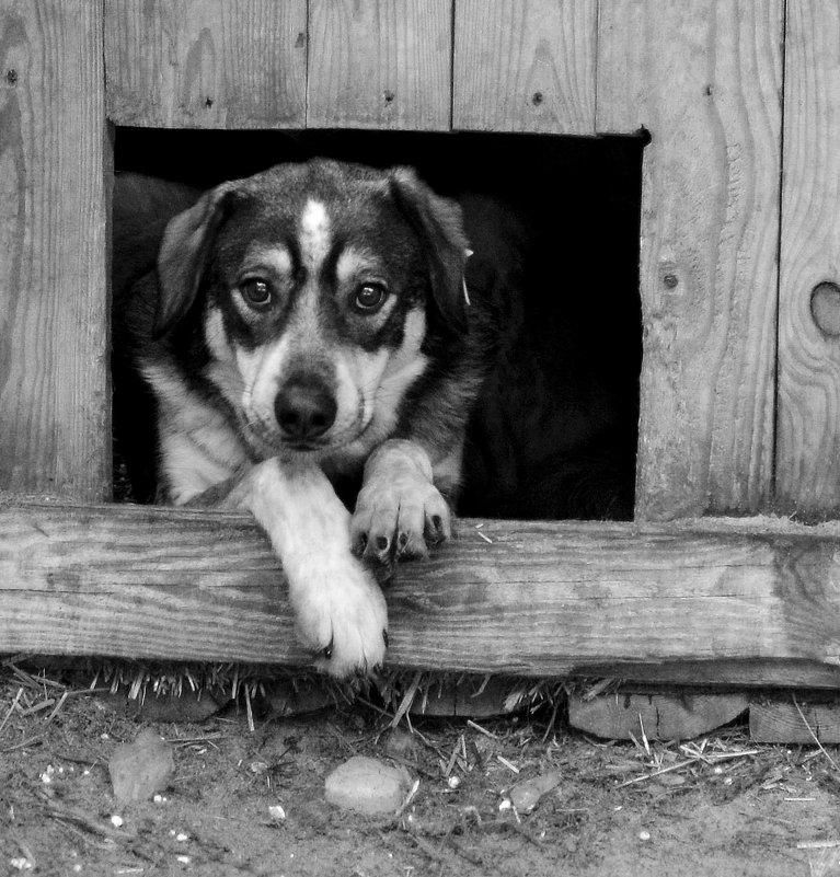 Жил- был пес. - Стас