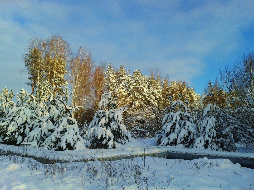 снежные деревья - Владимир