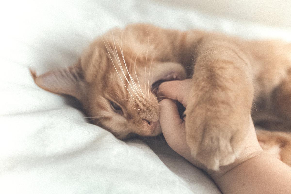 Опять про моего кота - Евгения К