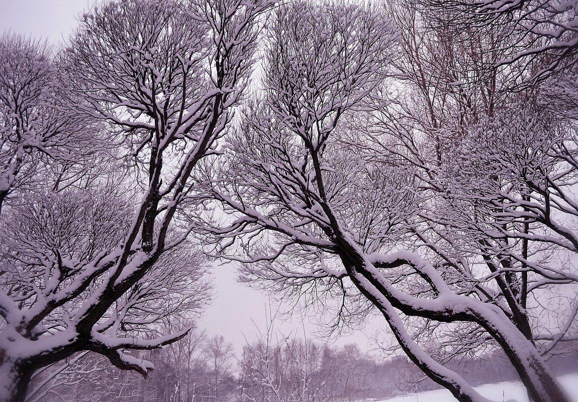 Зима распушилась... Вальсирует вечер...