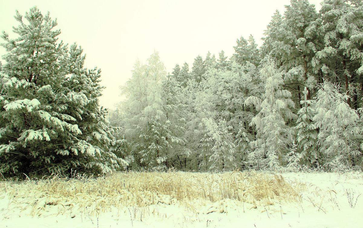 Зимняя сказка - Григорий Капустин