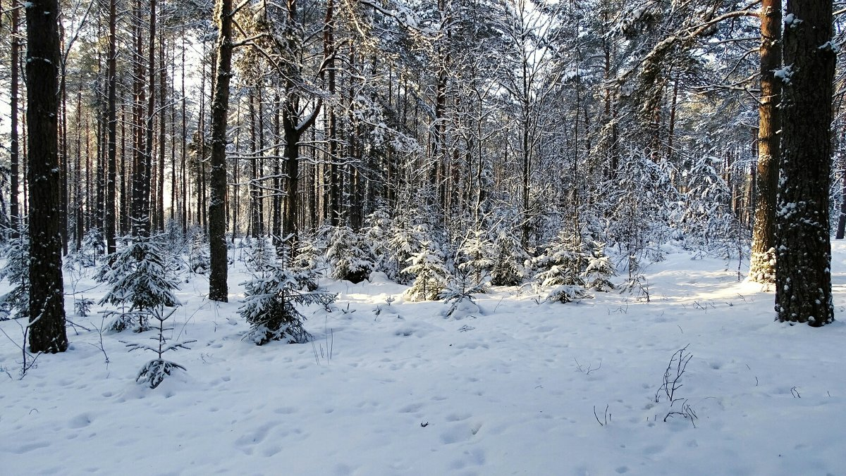 В зимнем лесу - Милешкин Владимир Алексеевич