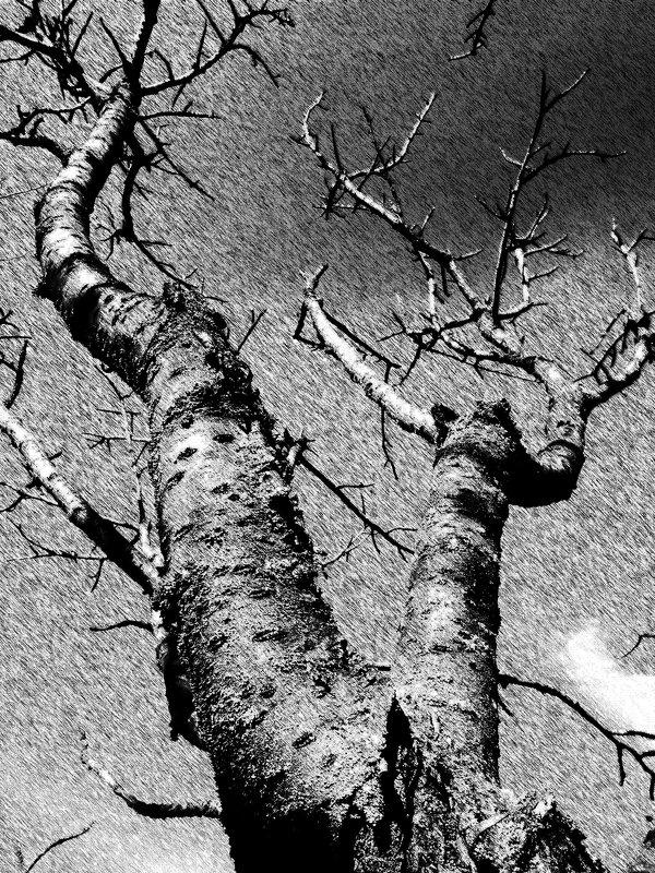 Дерево. - Анфиса