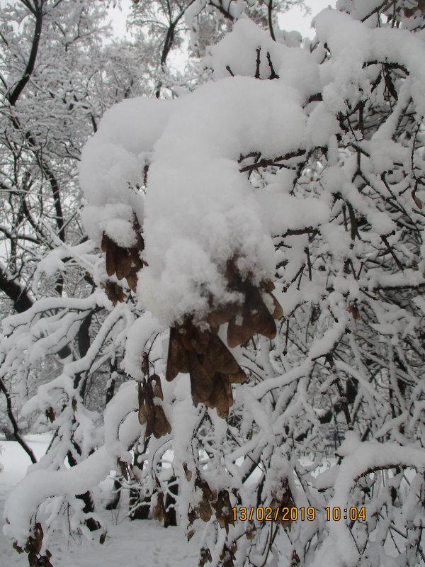 После снегопада.. - Зинаида