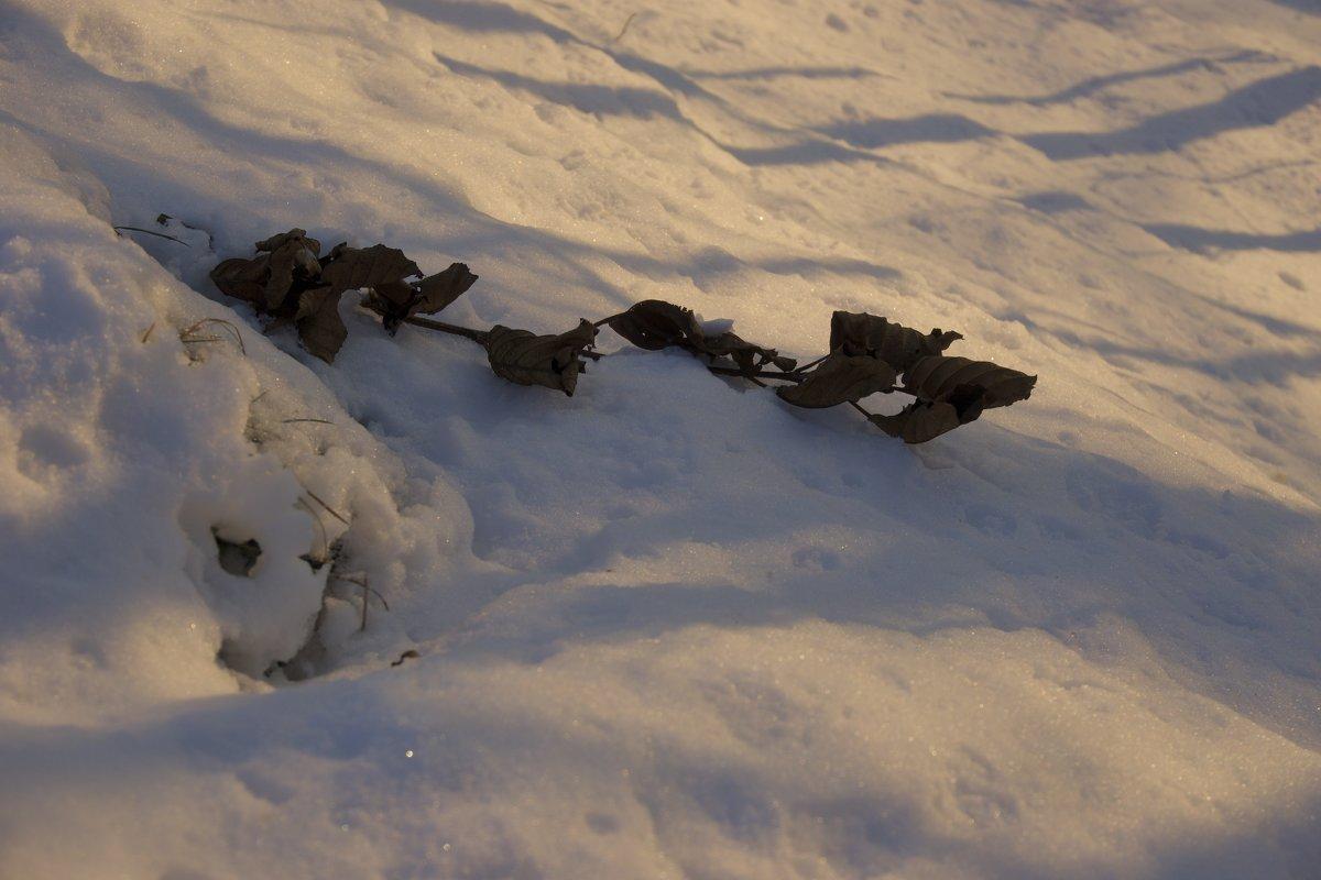 Листья на снегу - Руслан