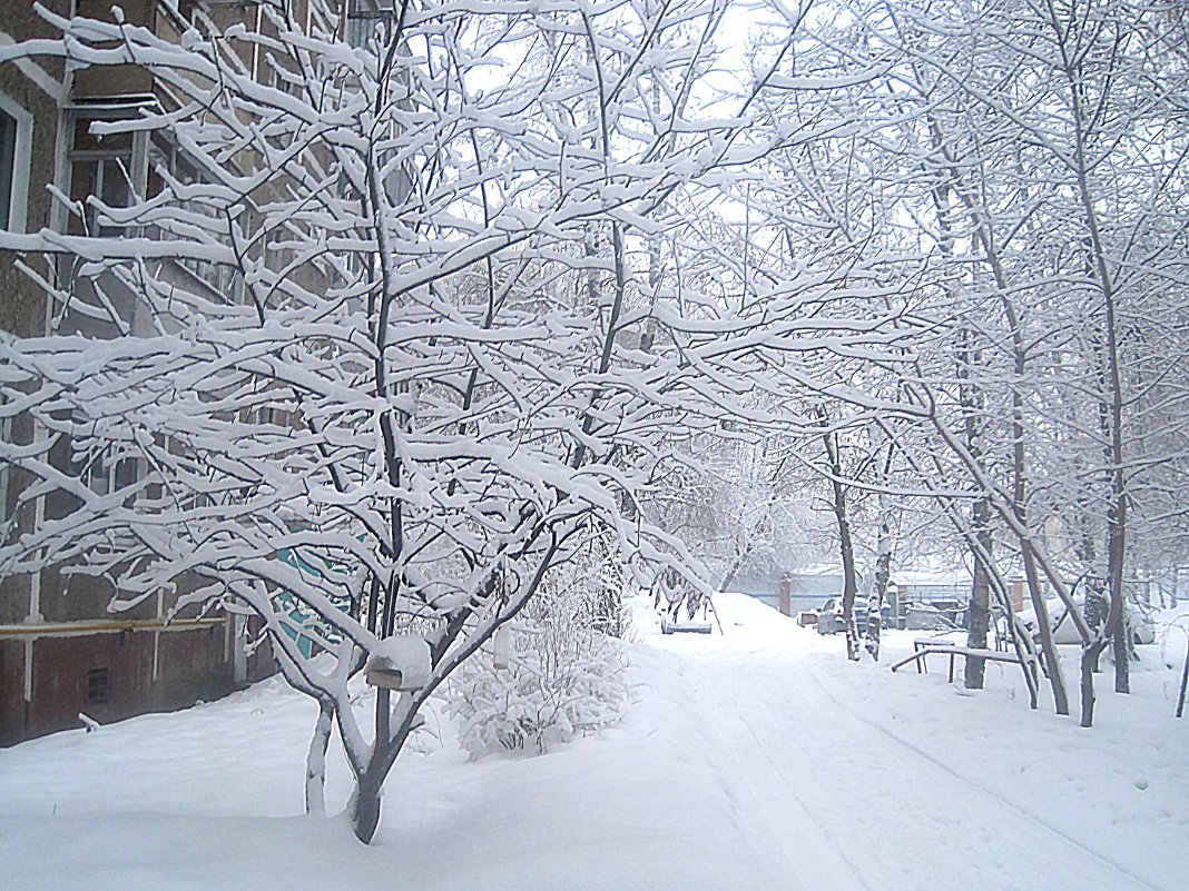 13-е февраля.Сильный снегопад - Елена Семигина