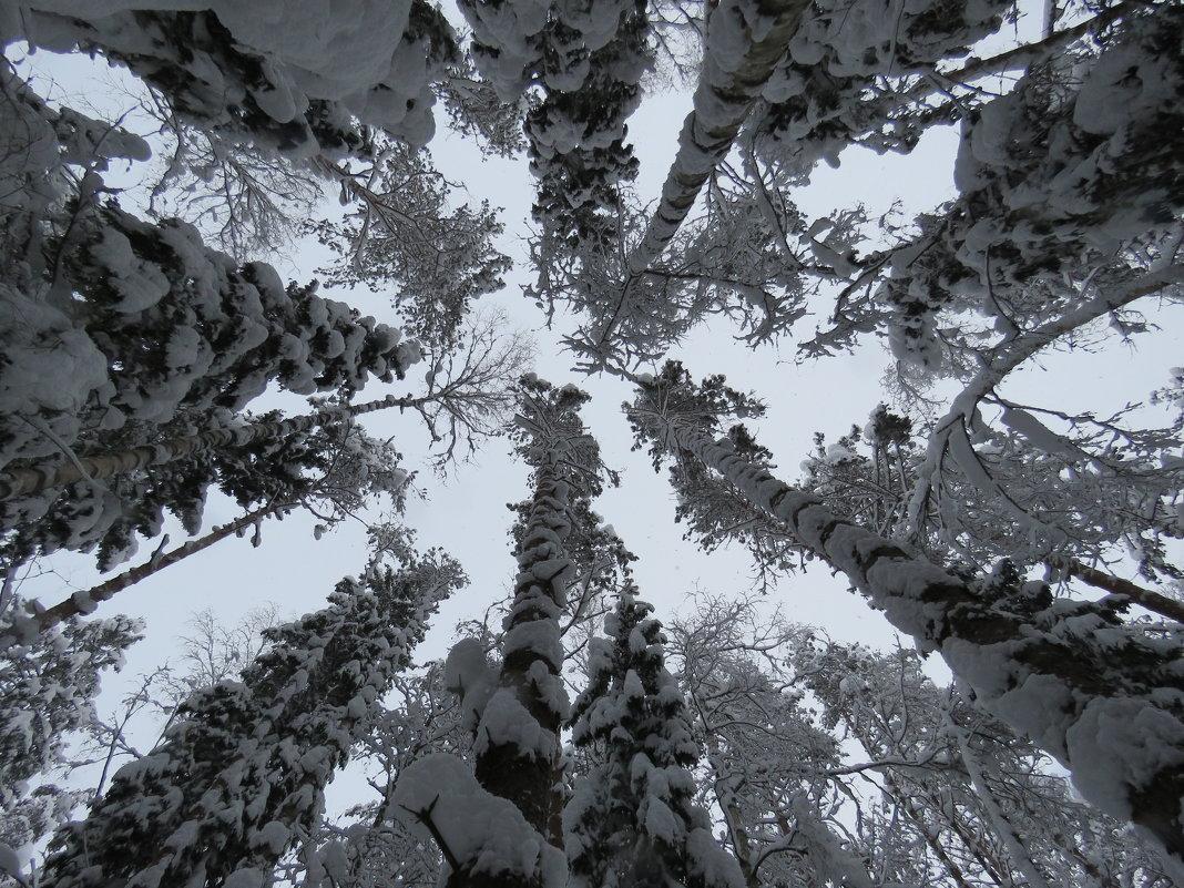вверху - Галина