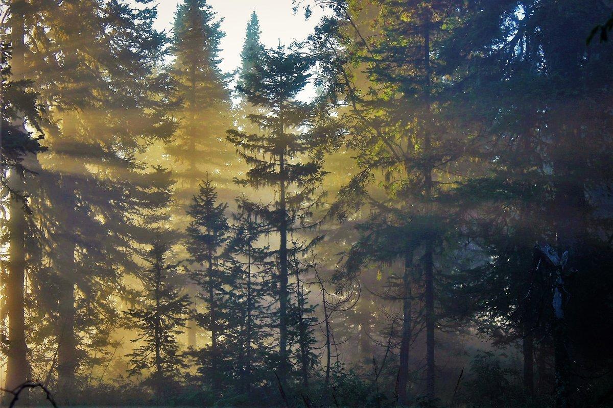 Рассветает в лесу - Сергей Чиняев