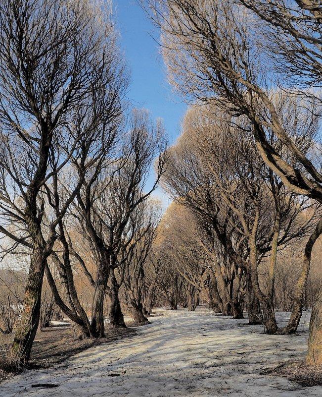 Ранняя весна - Евгений Седов