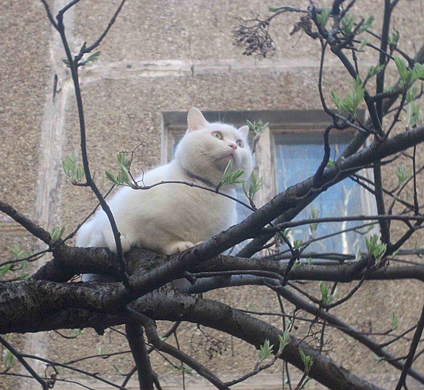 Коты прилетели - Елена Семигина