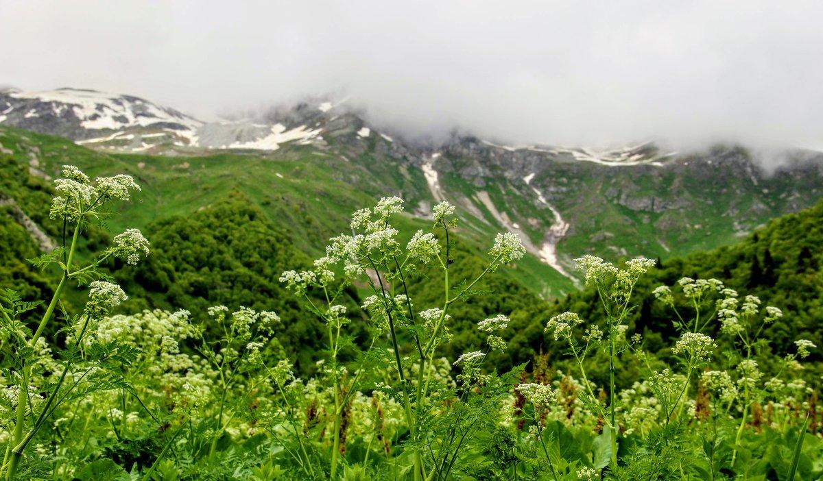 Альпийские луга - Вячеслав Случившийся