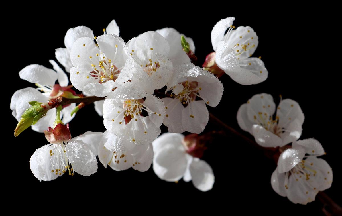 Весенний цветочный салют - Dr. Olver ( ОлегЪ )
