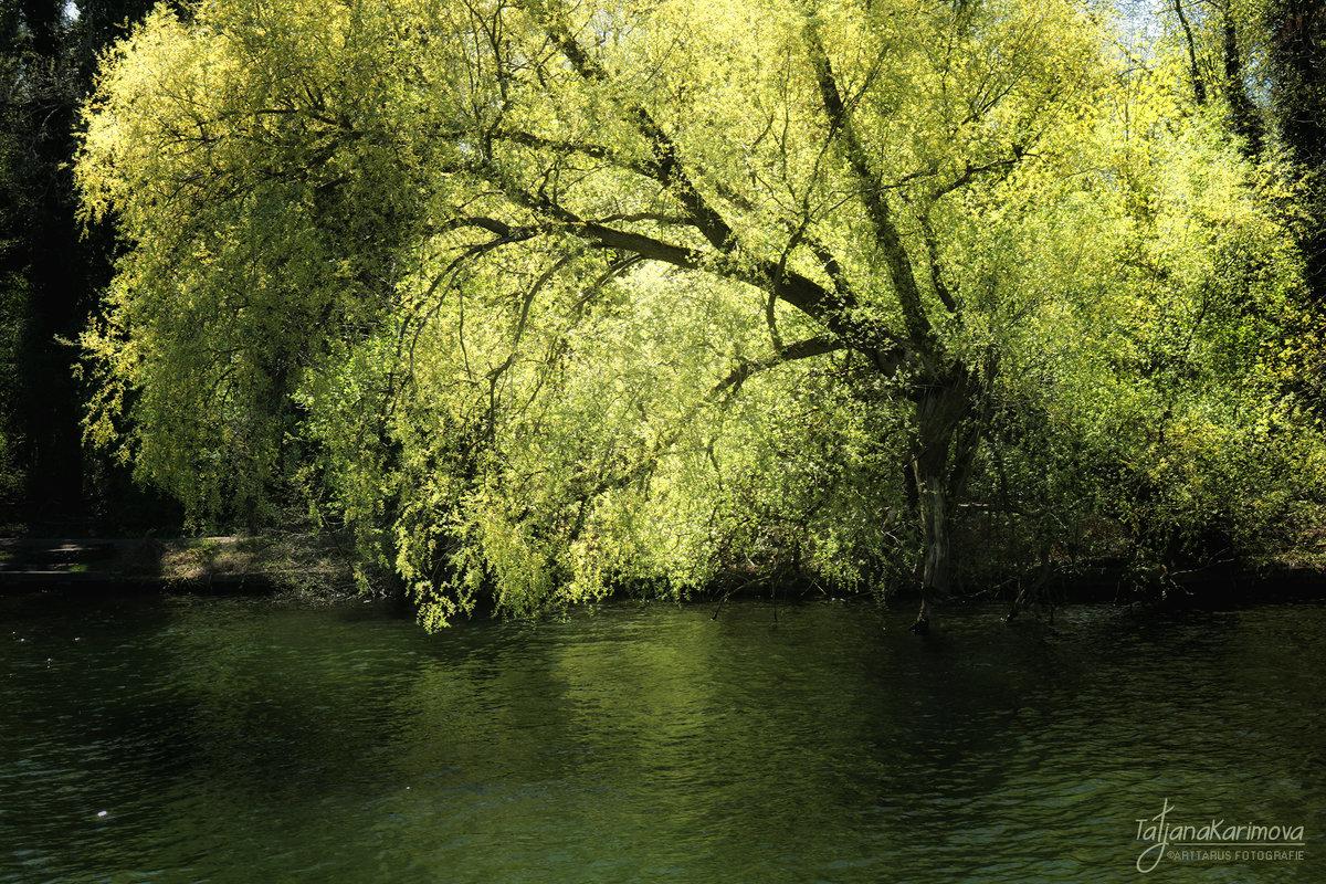 Дерево на берегу - Татьяна Каримова