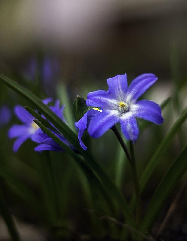 Первоцветы - gribushko грибушко Николай