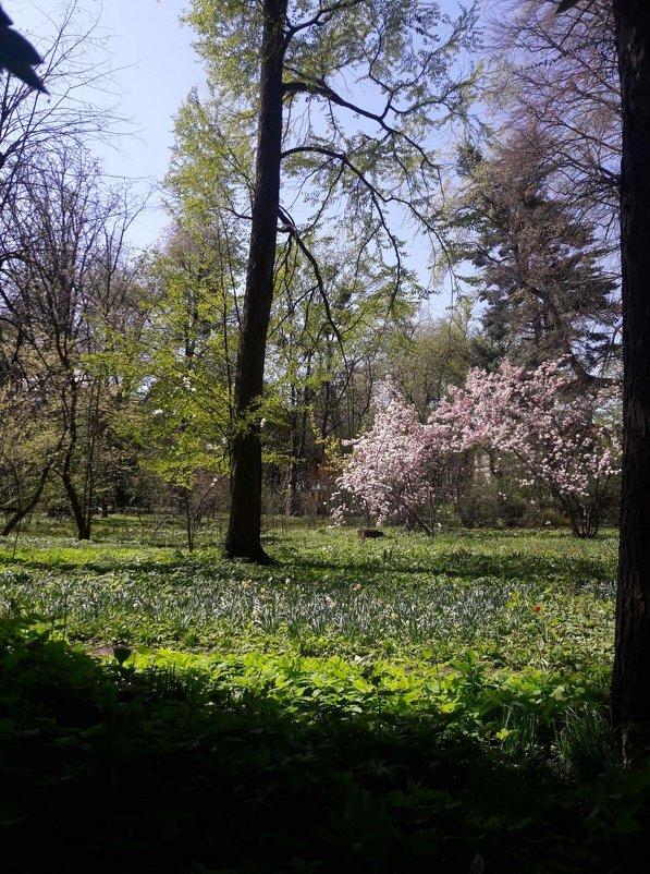 В ботаническом саду - Яна Чепик