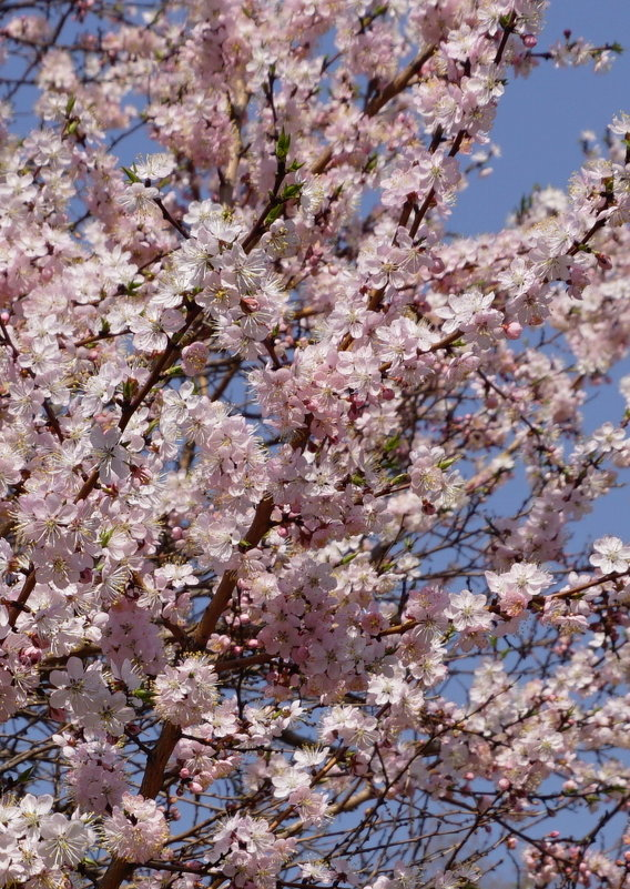 Цветение весны - Наталия Григорьева