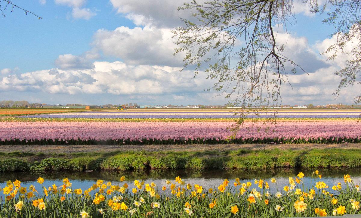 Тюльпанные поля