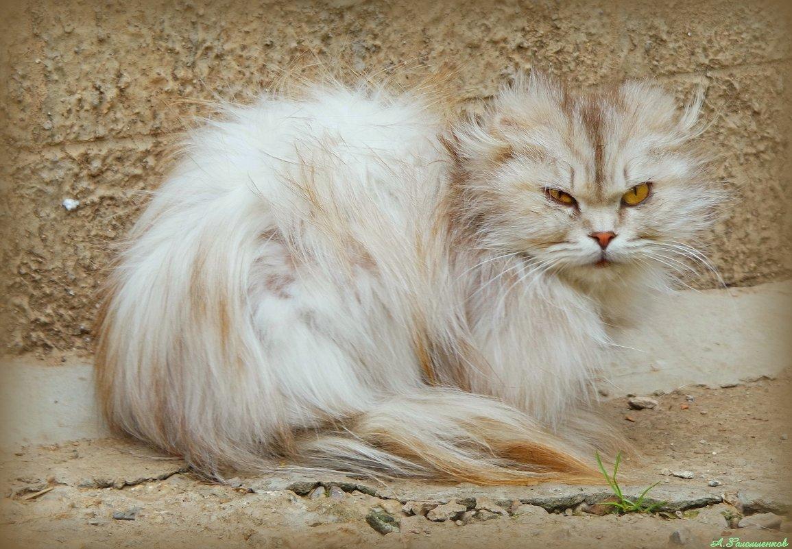Не нравишься ты мне что-то, фотограф! :-) - Андрей Заломленков