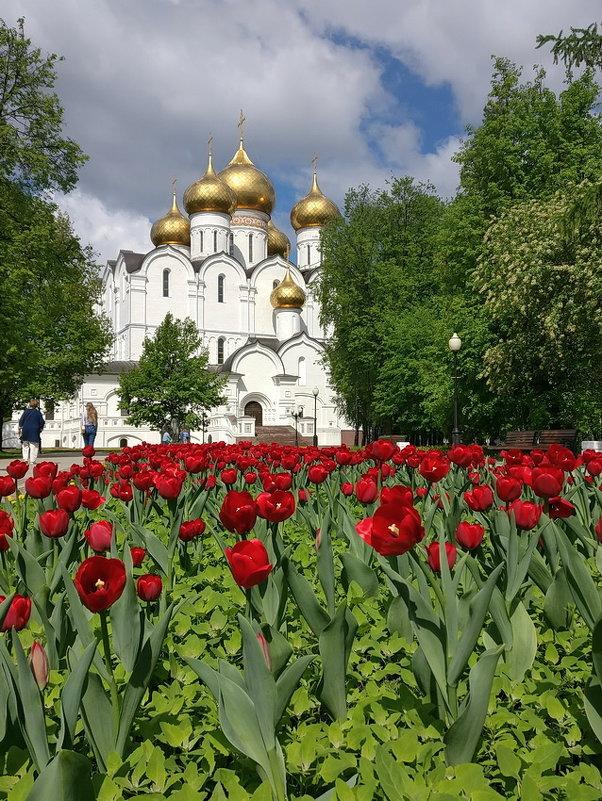 Золотые купола, алые тюльпаны ярославской весны - Николай Белавин
