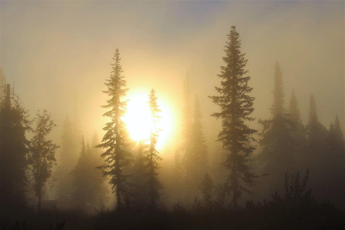 Восход в тумане - Сергей Чиняев