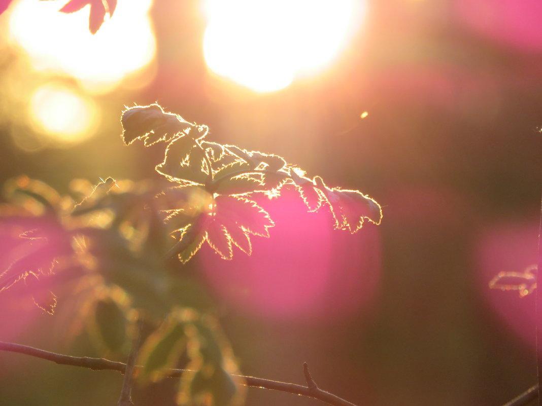рисунок солнцем - Галина