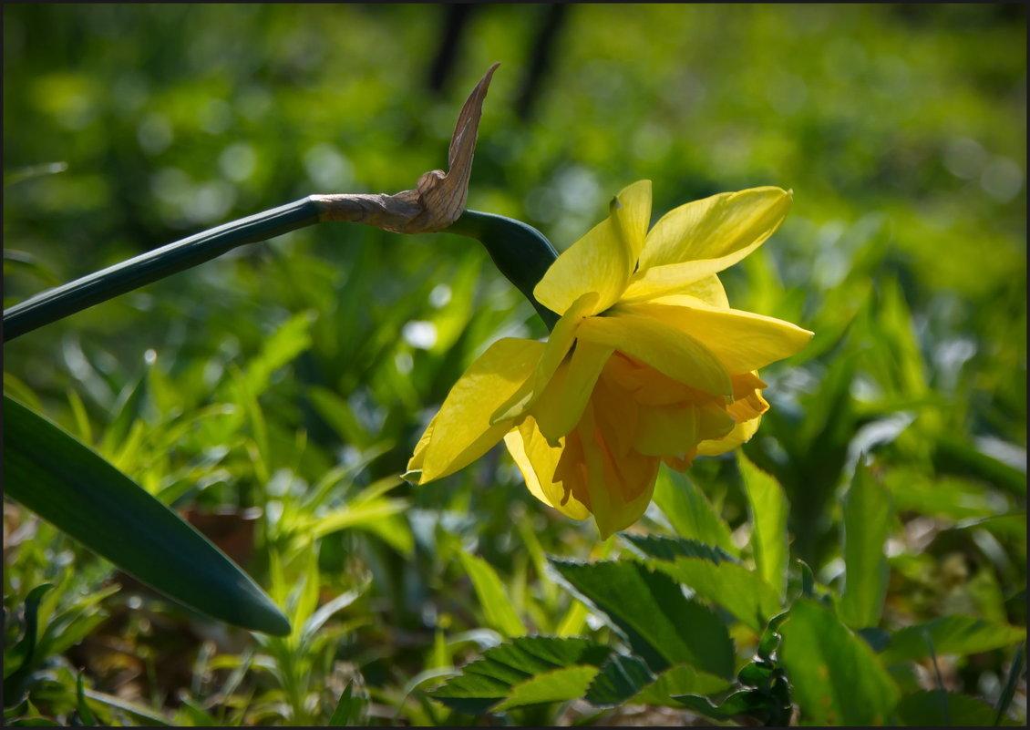 Поклон весне - lady v.ekaterina