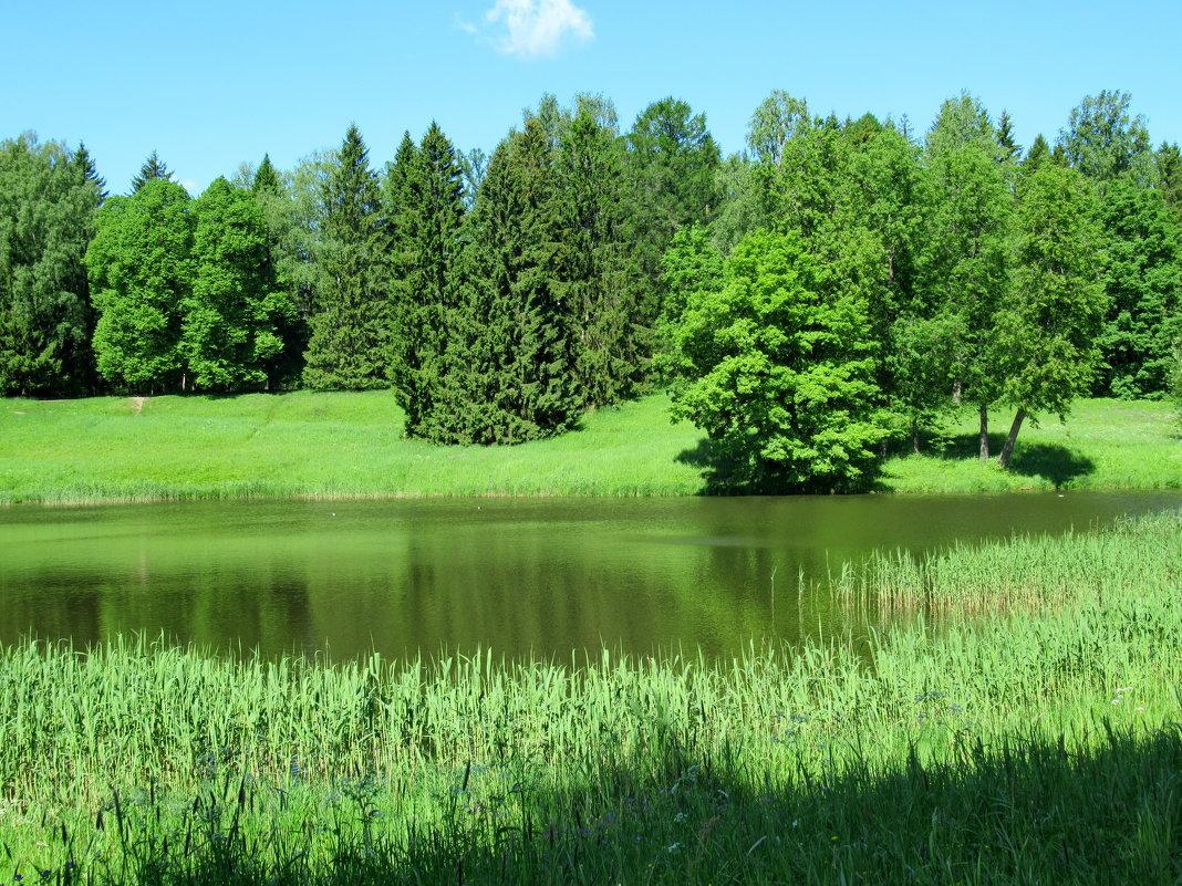 Озеро - Светлана Петошина