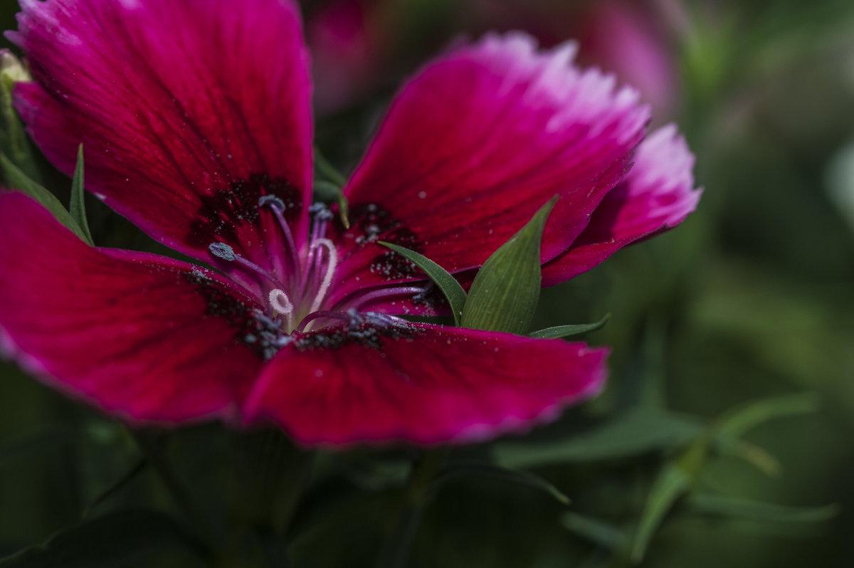 цветочное настроение - Осень