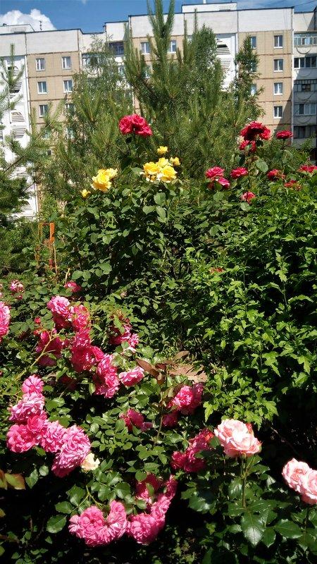 Красивый уголок во дворе - Serg