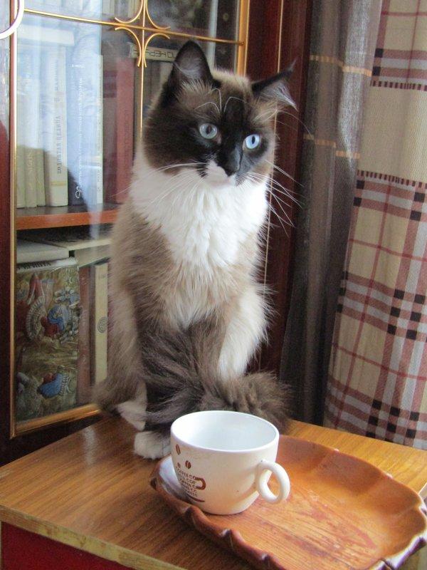 А где мой кофе? - Galaelina ***