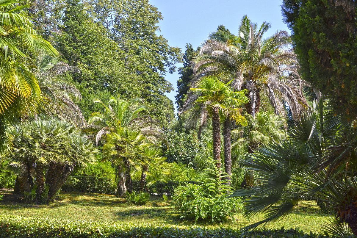 Пальмы - Александра