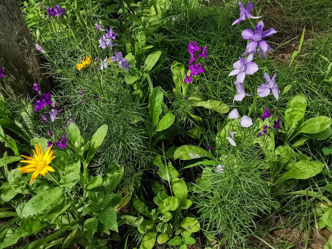 полевые цветы - жанна