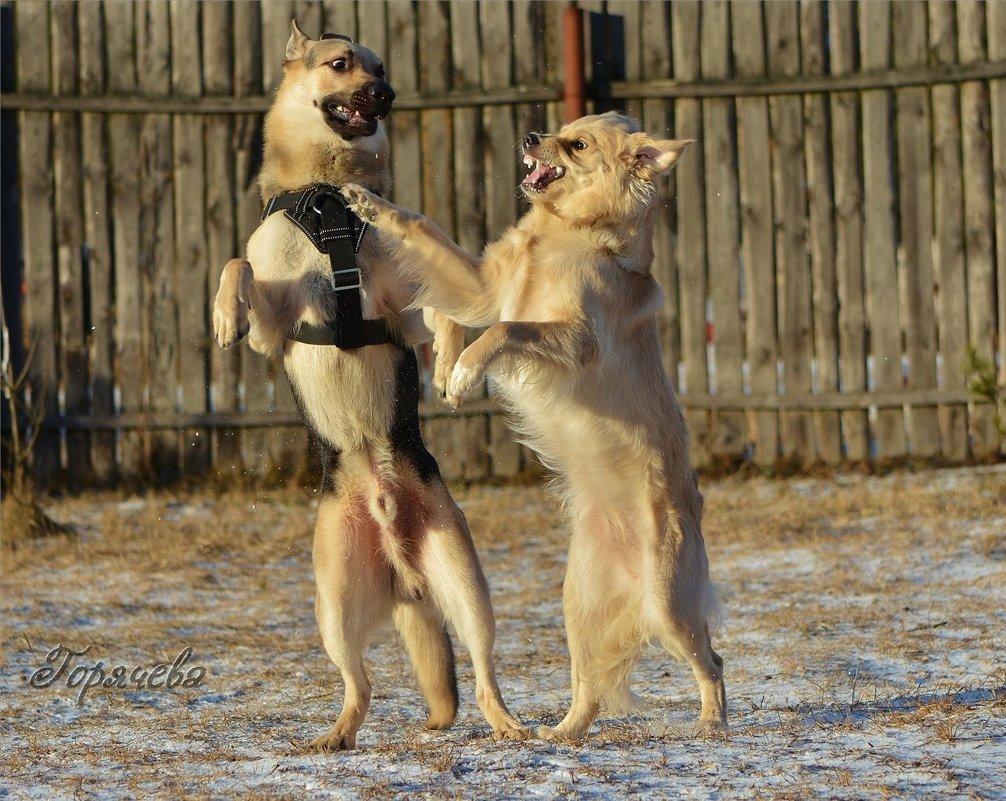 Я не танцую! - Светлана Горячева