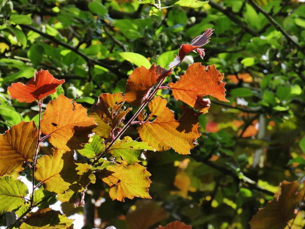 Цвета и свет - Heinz Thorns