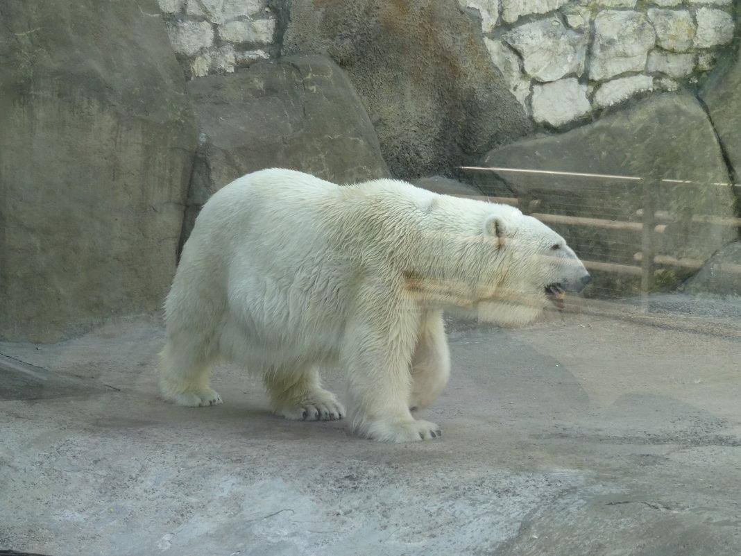 Зоопарк - Наташа