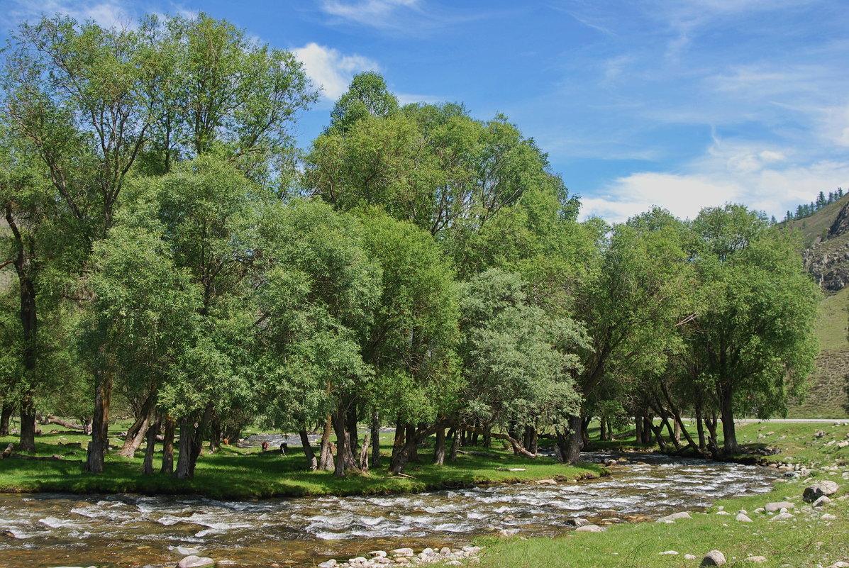 горная речка 3 - nataly-teplyakov