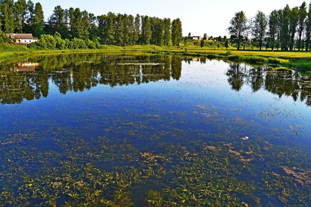 Цветет река Витьба - Vladimir Semenchukov